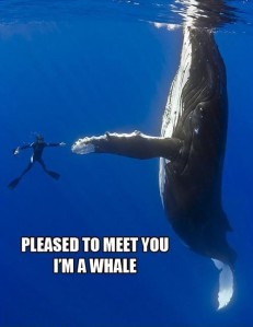 Found at: http://efunnyimages.com/funny-humpback-whale-scuba-diver/