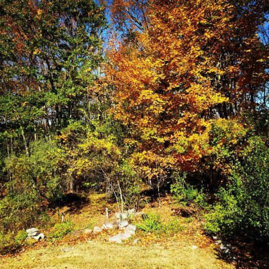 new england fall 4 back yard